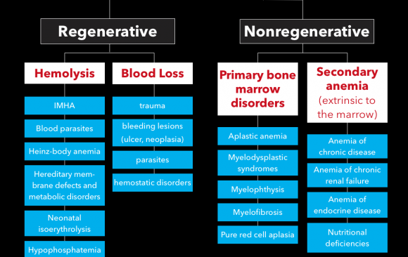 ANEMIA – GENERAL DIAGNOSTIC APPROACH