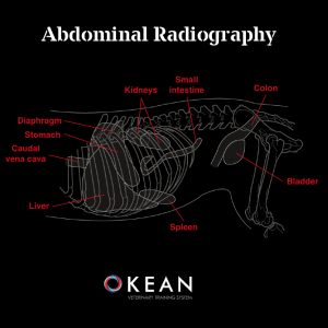 BASIC RADIOGRAPHY OF THE ABDOMEN