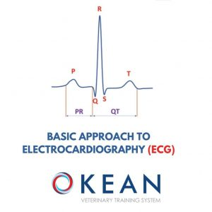 BASIC APPROACH TO ELECTROCARDIOGRAPHY (ECG)