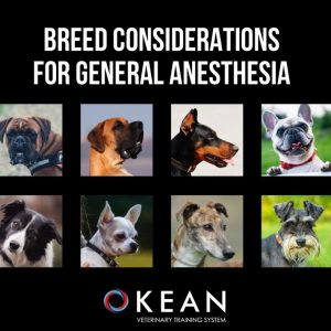BREED CONSIDERATIONS FOR GENERAL ANESTHESIA